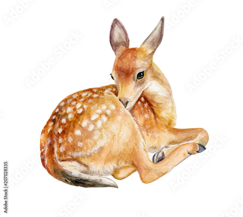 Fototapeta Fawn, deer sitting izolated on a white background. Watercolor. Illustration. Template. Hand drawing. Close-up. Clip art.