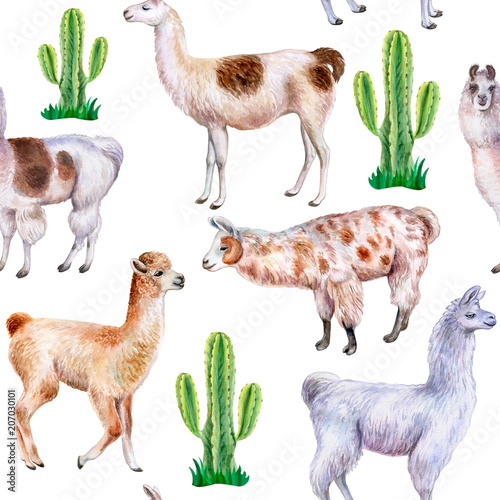 Llama and alpaca with cactuses isolated on white background. Seamless wallpaper, pattern. Watercolor. Illustration. Template. Clipart. Set - 207030101