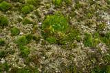 green moss on shell rock macro - 207031904