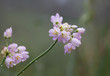 Fototapete Natur - Blume -