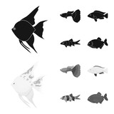 Botia, clown, piranha, cichlid, hummingbird, guppy,Fish set collection icons in black,monochrom style vector symbol stock illustration web. - 207052947