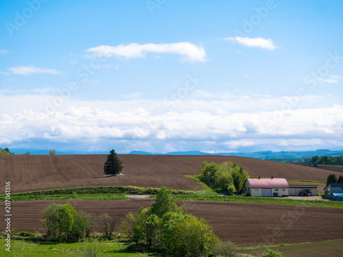 Fotobehang Cappuccino 北海道の風景