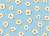 White daisy flowers. Pattern with chamomile flowers on blue background. Vector illustration