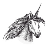Unicorn horse animal sketch of magic creation