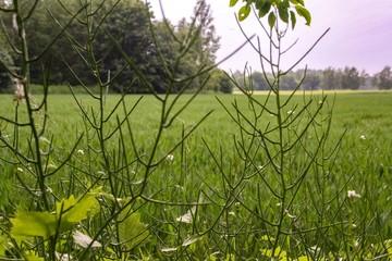 green, natur, gras, frühling, sommer, baum, pflanze, himmel, feld, blatt, wiese, landschaft, blume, blatt, wald, auflösungszeichen, blau, ast, frisch, baum, laub, weiß, ausserhalb, hell, flora