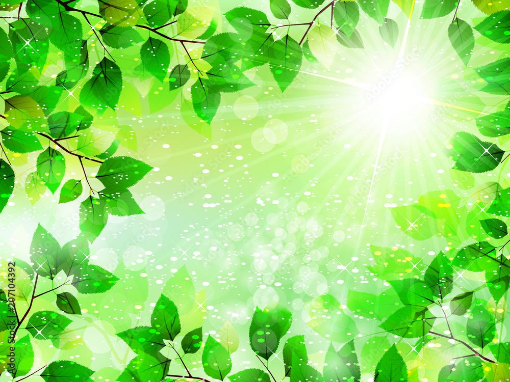 新緑と太陽