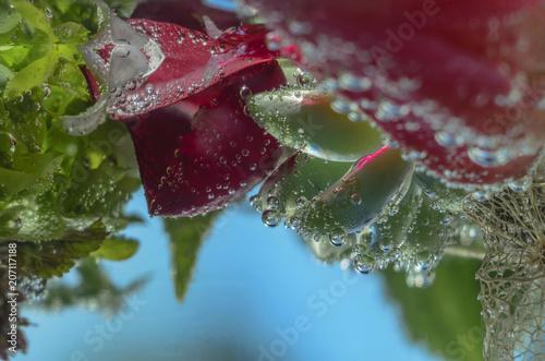 Aluminium Iris Still-life with bubbles