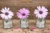 Endlich Sommer - zarte Blüten der Bornholm- Margerite auf rustikalem Holz