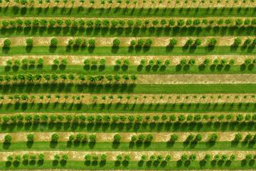 Obstbaumplantage