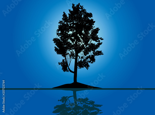 single black pine with reflection on blue