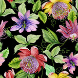 Beautiful passion flowers (passiflora) on climbing twigs with leaves and tendrils on black background. Seamless floral pattern. Watercolor painting. Hand painted illustration.