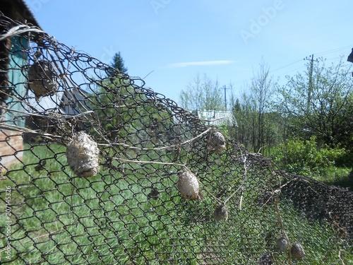 Fotobehang Olijf fence, sky, nature