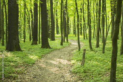 Fotobehang Lente green forest in the summer