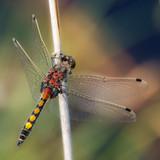 Dragonfly - 207153384