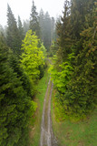 Top view of the road in the coniferous forest