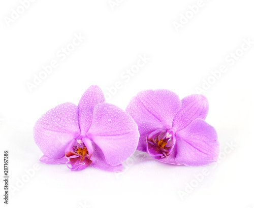 due orchidee