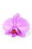macro su orchidea