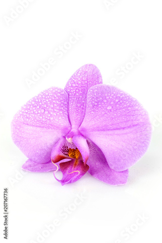 macro su orchidea - 207167736