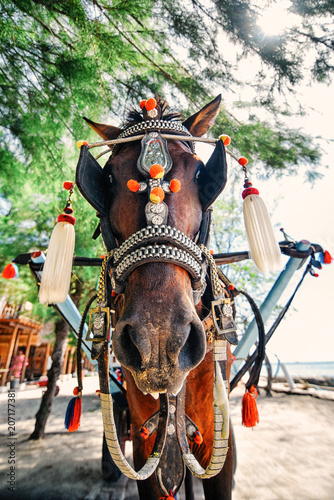 Plexiglas Bali horse cart in gili trwangan