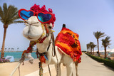 Funny camel with heart shaped sunglasses dressed in costume - 207183703