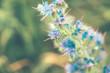 Wildflower in nature