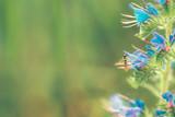 Wildflower in nature - 207183974