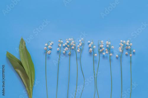 Fotobehang Lelietjes van dalen lily of the valley on blue background