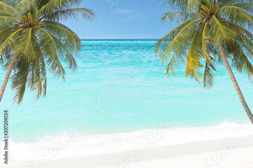 Aluminium Lichtblauw palm tree and sea summer