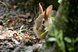 Rabbit Peeking Out
