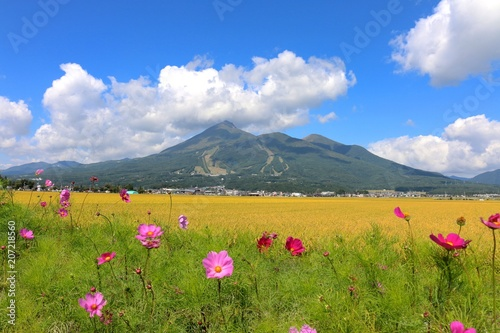 コスモスと磐梯山(福島県・猪苗代町) - 207218560