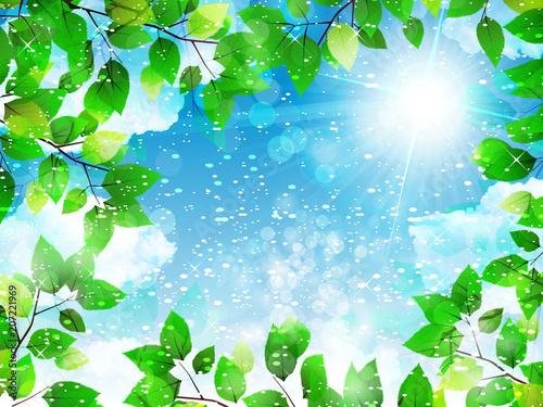 葉っぱと青空