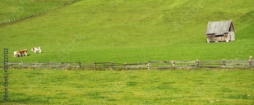 Austrian meadow - 207225122