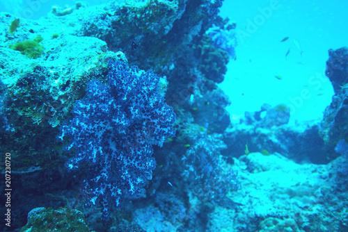 Fotobehang Turkoois Coral reef