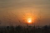 Wild grass in the morning sunrise - 207235704