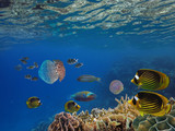 Shoal of fish and giant jellyfish - 207237773