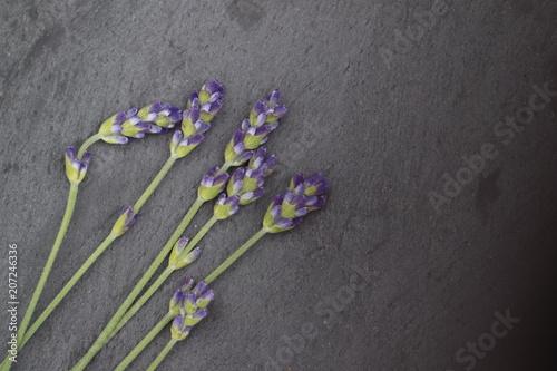Aluminium Lavendel fleur de lavande arrière plan