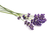 Lavender flowers bunch - 207248712