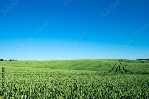 Fotobehang Lente field of green grass on a background sky