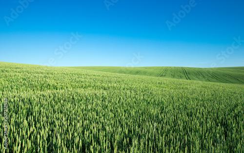 Aluminium Zomer field of green grass on a background sky