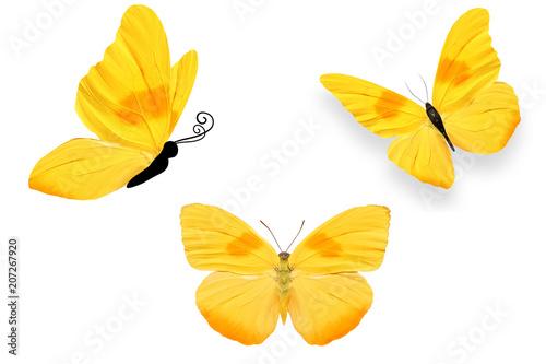 Aluminium Vlinder Три бабочки с жёлтыми крыльями и оранжевыми пятнам, изолирована на белом