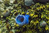 blue branching vase sponge - 207272319