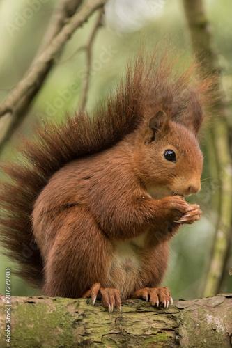 Foto Murales ardilla comiendo en árbol
