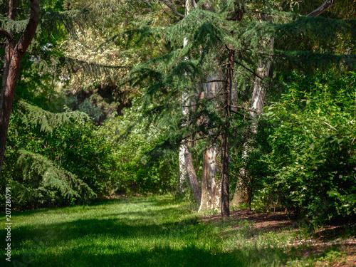 Fotobehang Weg in bos Quinta de los Molinos