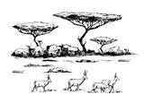 African savanna with antilopes - 207281175