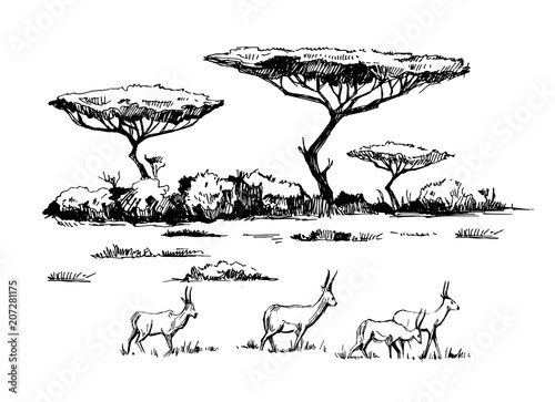 African savanna with antilopes