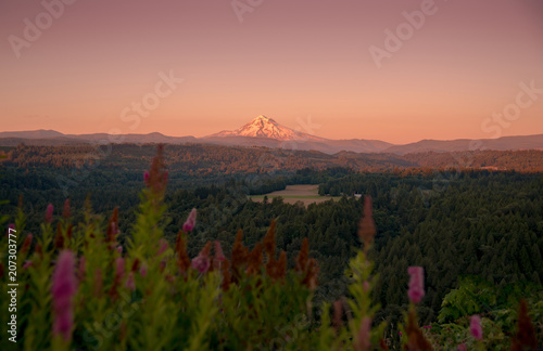 Canvas Zalm Mt Hood in the summer evening warmth over valley and wildflowers