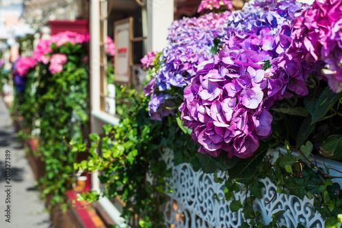 Fotobehang Hydrangea Hydrangea Flowers in the Lace Metal Pot