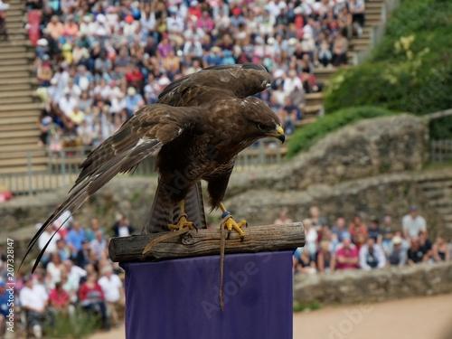 Canvas Eagle Rapace