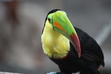Colorful toucan from Costa Rica - 207330325