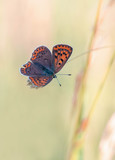 Beautiful butterfly makros - colorful, fantasy